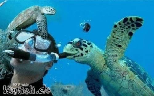 Mörderische Schildkröte