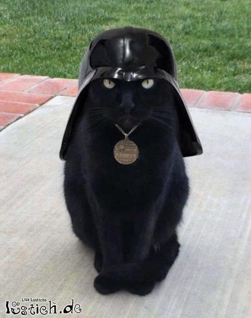 Miez, ich bin dein Vater