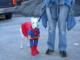 Superhund