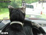 Katze im Racing Spiel