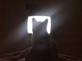 Alien Katze