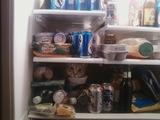 Katze im Kühlschrank versteckt
