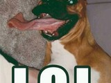 Hund mit langer Zunge
