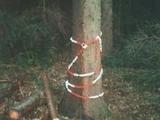 Diebstahlsicherung für Baum