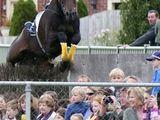 Pferd mit Überraschungssprung