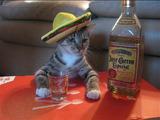 Tequila Katze