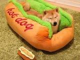 Müder Hot Dog