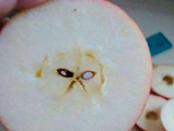 Grumpycat-Apple
