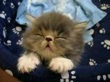 Katze kurz vorm Einschlafen