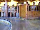 Domino Day in Kneipe
