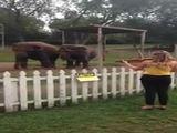 Tanzende Elefanten